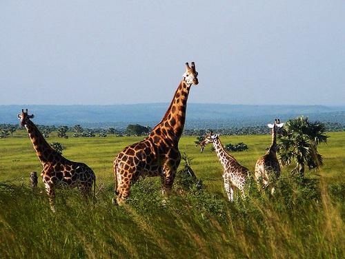 11 Day Uganda Safari Trip