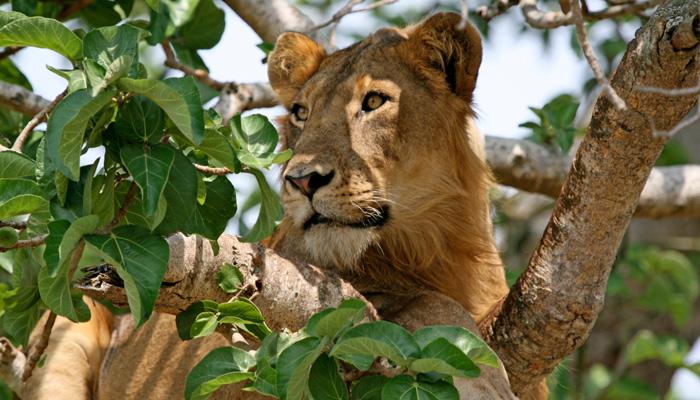 3 Days Queen Elizabeth Safari Uganda